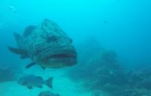 scuba-diving-subic-bay-mangos-dive-center (17)