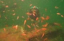 scuba-diving-subic-bay-mangos-dive-center (46)